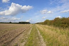 Farm track at harvest time Royalty Free Stock Photo