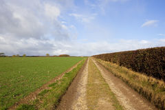 Farm track with hedgerow Royalty Free Stock Photos