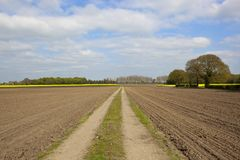Farm track at and fields in springtime. Farm track through newly cultivated fields with poplar trees and mixed woodland on the horizon at Naburn near York under Royalty Free Stock Photo