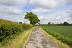 Farm track and oak trees. A farm track with oak trees and hawthorn hedgerows near Spring wheat crops under a blue cloudy sky in Yorkshire Royalty Free Stock Photos