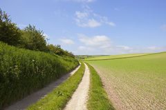Farm track and pea field Royalty Free Stock Photography