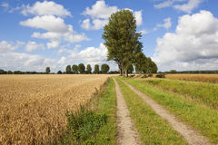 Farm track and poplar trees Stock Images