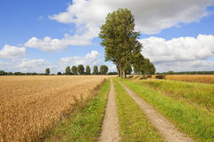Farm track and poplar trees in summertime Royalty Free Stock Images