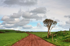 Farm track running between lush green fields. Stock Images