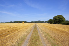 Farm track with stacked straw bales and Oak trees Stock Images