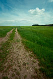 Farm track to the sky. Dirt road inbetween green barley fields und blue sky royalty free stock photo