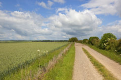 Farm track with wheat field Stock Images