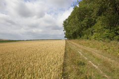 Farm track with wheat Royalty Free Stock Photo