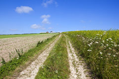 Farm track and wildflowers Stock Image