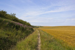 Farm track with willowherb Royalty Free Stock Images