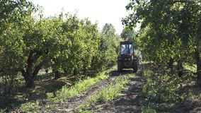 Farm tractor drive apple tree plantation at harvest time. 4K. Farm tractor drive in apple tree plantation at harvest time on autumn. 4K UHD video clip stock video footage