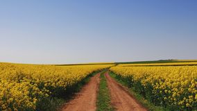 Farm tractor in a rapeseed field and blue sky, beautiful spring day. Rapeseed field and blue sky, beautiful spring day stock footage