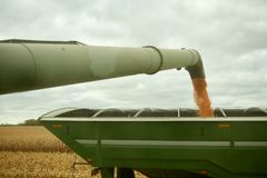 Farm trailer being filled with harvested maize. By the arm and hopper of a combine harvester viewed along its length to the pouring kernels Stock Image