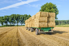 Farm trailers fully loaded with piled bales of straw. Agricultural trailers fully loaded with straw bales in a wheat stubble field ready for transport to the Royalty Free Stock Image