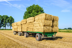 Farm trailers fully loaded with piled bales of straw. Agricultural trailers fully loaded with straw bales in a wheat stubble field ready for transport to the Stock Images