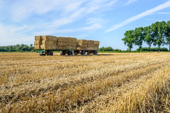 Farm trailers fully loaded with stacked bales of straw. Agricultural trailers fully loaded with piled straw bales in a wheat stubble field ready for transport to Stock Photos