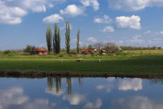 Farm with trees and sheep with reflection Royalty Free Stock Image