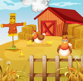 A farm with two chickens and three chicks Stock Images