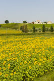 Farm in Umbria Stock Photography