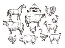 Farm, vector sketch. Collection animals such as horse, cow, bull, sheep, pig, rooster, chicken, hen, goose, rabbit