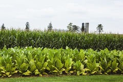 Farm with vegetable crops Royalty Free Stock Images