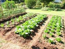 Farm vegetable garden Stock Photography