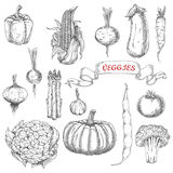Farm vegetables sketches for food design Stock Image