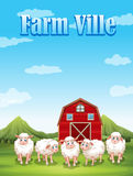 Farm ville with sheeps and barn Royalty Free Stock Photography