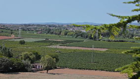 Farm Vineyard trip Car. Spain, city of Calig August 2014. The trip by car. Accelerated video stock video footage