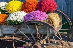 Farm Wagon Mums Stock Photo