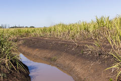 Farm Water Crops Royalty Free Stock Photography