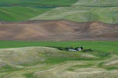Farm in wheat field Stock Image