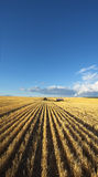 The farm in wheaten fields Royalty Free Stock Images