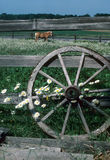 Farm Wheels. A horse looks through the fence at the photographer Royalty Free Stock Photography