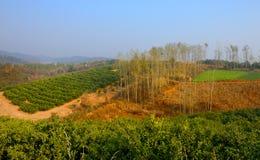 Farm where the citrus trees Stock Photography