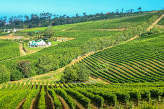 Farm winery Cape Town. Aerial view of winery farm in green grapevine. Constantia, Cape Town, South Africa. The Constantia Wine Valley is the most spectacular Royalty Free Stock Photos