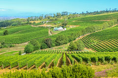 Farm winery South Africa. Aerial view of farm winery in green grapevine in Constantia, Cape Town, South Africa. The Constantia Wine Valley is the most Royalty Free Stock Photo