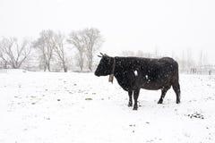 Farm in winter royalty free stock photo
