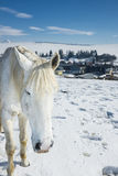 Farm in winter with horses. A farm in winter and with snow and horses in a sunny day Stock Image