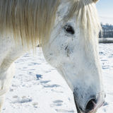 Farm in winter with horses Royalty Free Stock Images
