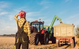 Farm woman monitoring progress of the harvest on site stock image