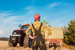 Farm woman monitoring progress of the harvest on site stock photo