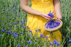 Farm woman in yellow dress hands pick cornflower Royalty Free Stock Photos