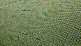 Farm Work Aerial Photo. Detasslers work on machinery in an Indiana corn field. Aerial Farm photo shows irrigation and lines in field from irrigator wheels stock photography