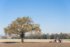 Farm work, harrowing of a field. Agricultural landscape with a tree and tractor plowing the field with harrow Royalty Free Stock Image