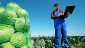 Farm worker checks cabbage while typing on a laptop. stock footage