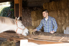 Farm worker feeding horses Stock Image