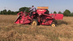 Farm worker harvest wheat plants with red combine harvester Royalty Free Stock Image