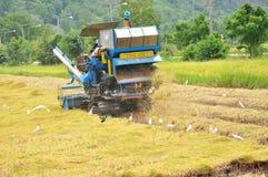 Farm worker harvesting rice Royalty Free Stock Photos