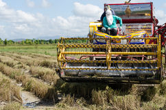 Farm worker harvesting rice with tractor Stock Photography